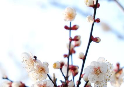 いつ 立春